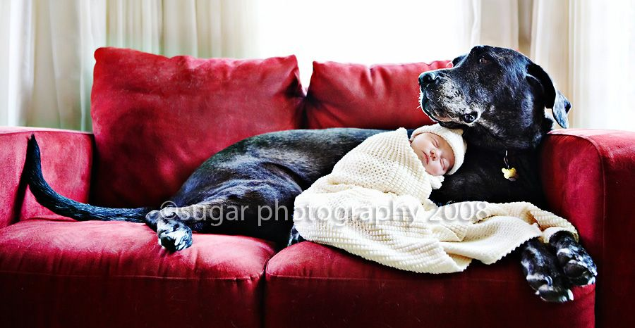 When I Have A Baby And A Great Dane Life Will Be Good Great