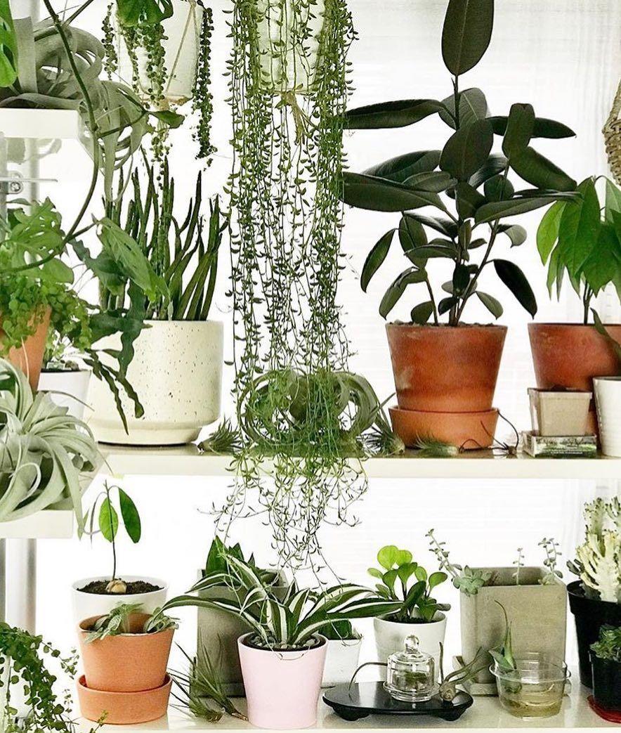 Plants, Indoor Vegetable Gardening, Fall