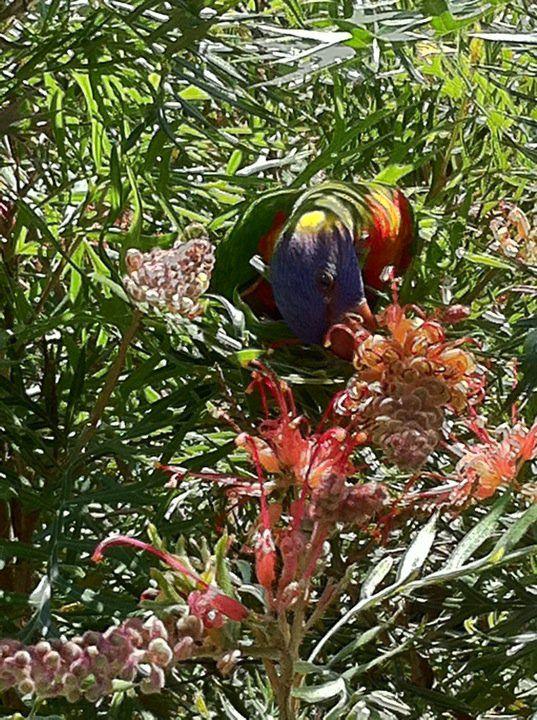 Watch the birdy! Beautiful lorikeet.