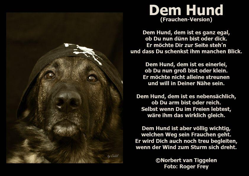 Wenn Sie Auf Dieses Gedicht Klicken Besuchen Sie Das Buch Wortschatze Von Norbert Van Tiggelen Indem Weitere Ahnl Zitate Tiere Spruche Tierliebe Hund Zitat