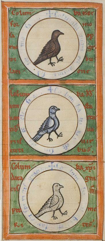 Medieval Bestiary : Dove Gallery