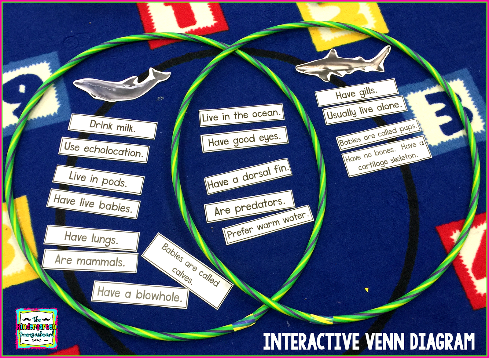 Ocean animals research and writing venn diagrams kindergarten ocean animals research and writing pooptronica Gallery