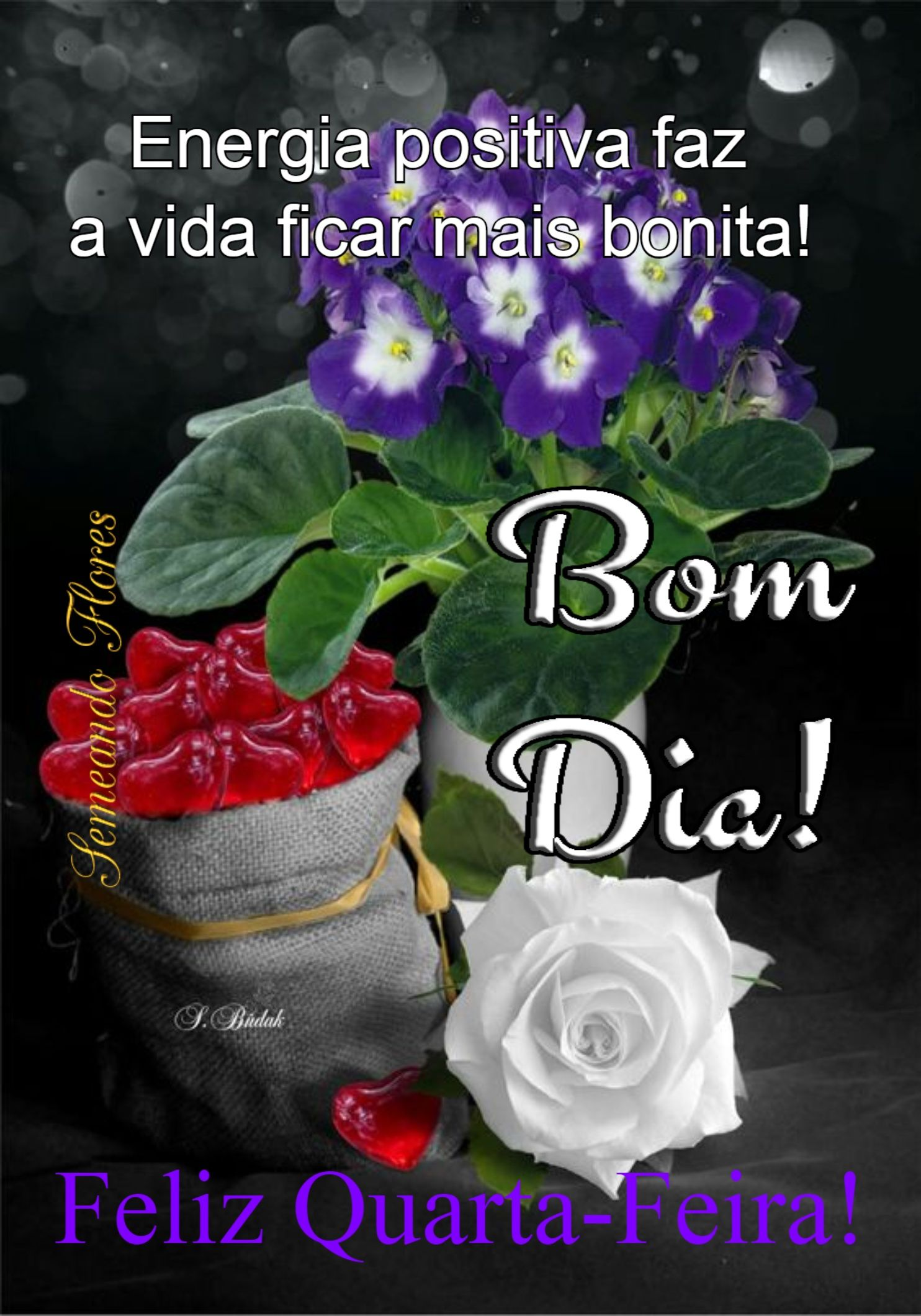 Pin De Cidinha Nobrega Em Sempre Cidinha Bom Dia Com Flores Bom