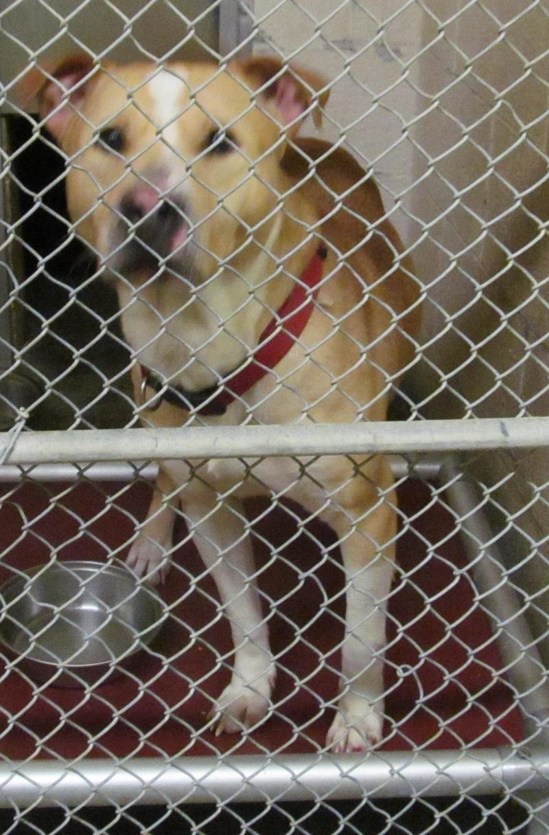 Adopt 06 Morris To Humane Society On Animal Help Humane Society Baby Animals