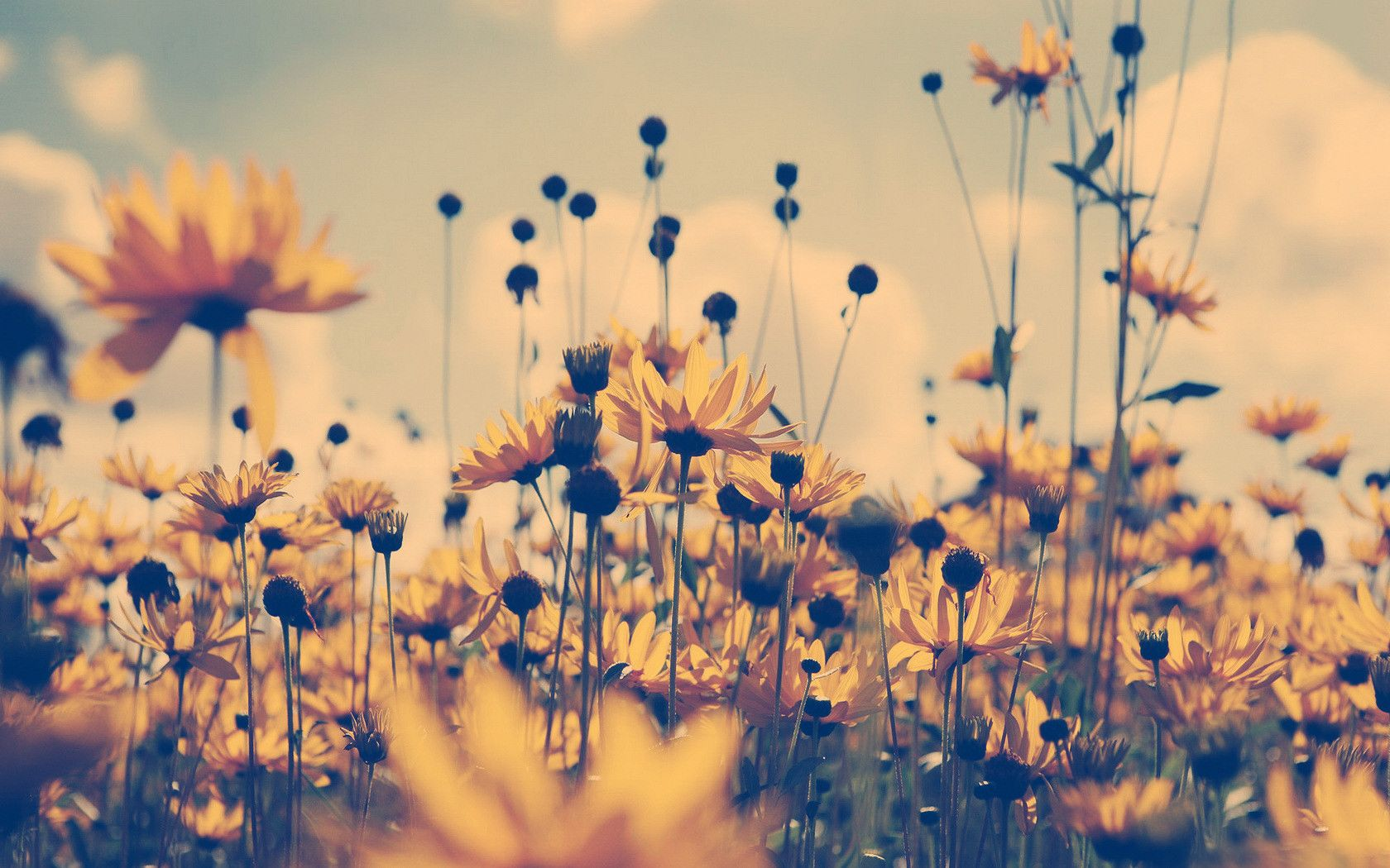 Vintage Sunflower HD Wallpaper