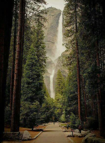 Yosemite falls , California , water fall , red wood trees , explore , wanderlust , travel