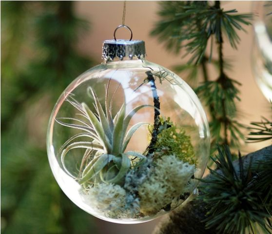 A Mini Terrarium To Hang From Your Tree Boughs Christmas Tree Ornaments Unique Christmas Ornaments Creative Christmas Trees