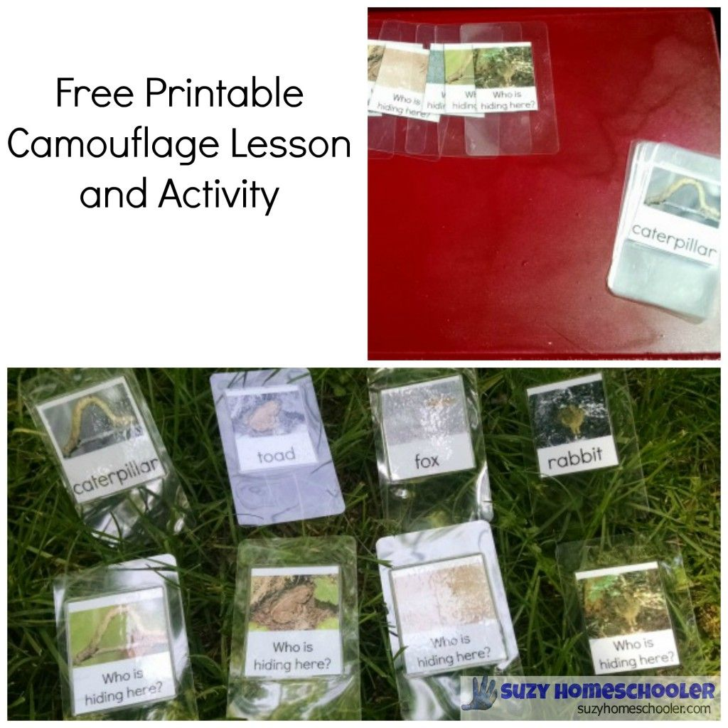 Free Printable Camouflage Lesson And Activity