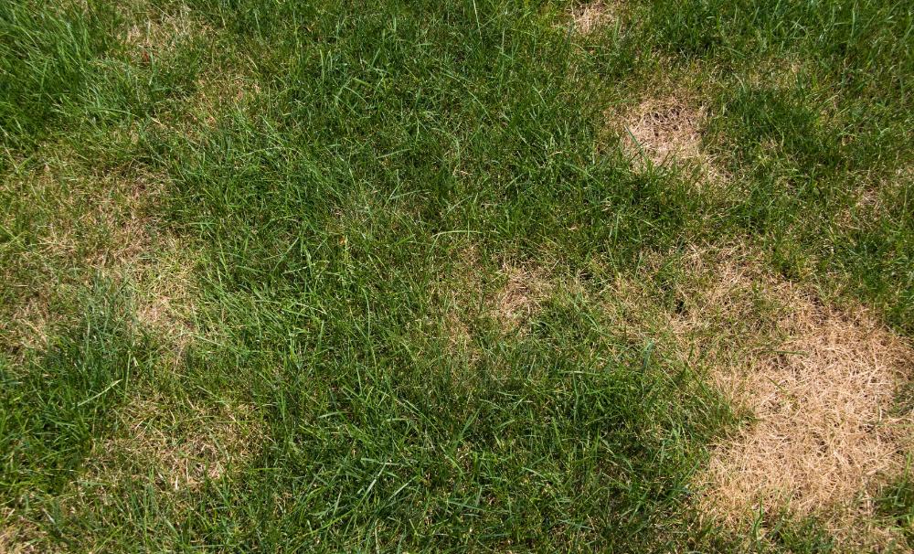 610a37ed67b5f07f7a557fb5df67c575 - How To Get Rid Of Clover Patches In Lawn