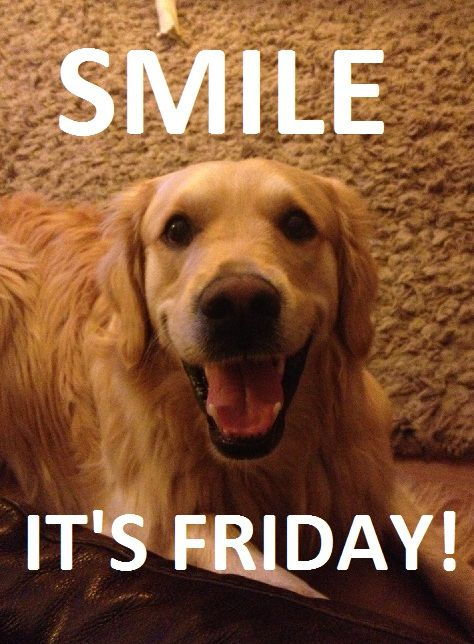 Smile It S Friday Golden Retriever Funny Golden Retriever Funny