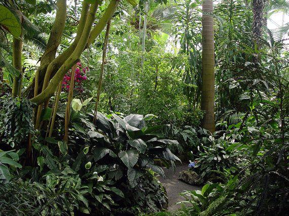 Tropical Rainforest Garden Fine Art Photography 20 00 Woodland