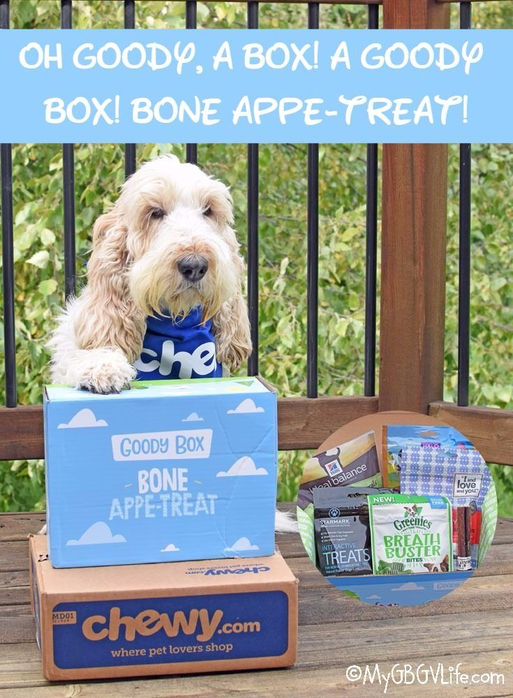 Oh Goody A Box A Goody Box Bone Appe Treat Chewy Influencer