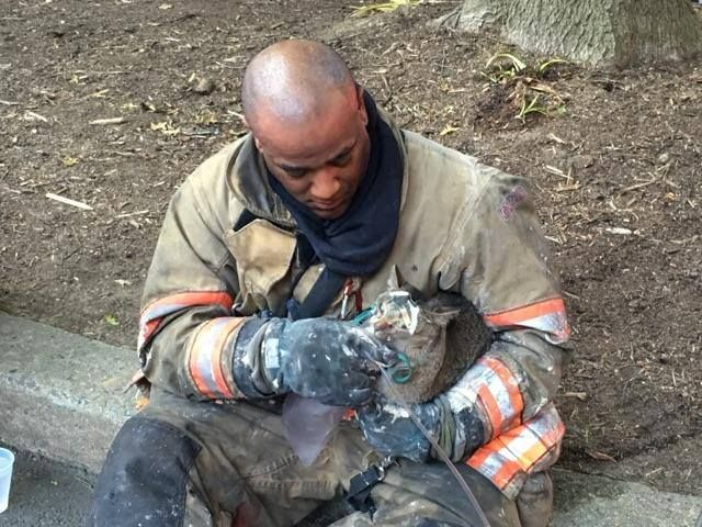 photo of firefighter holding cat who he just rescued from fire