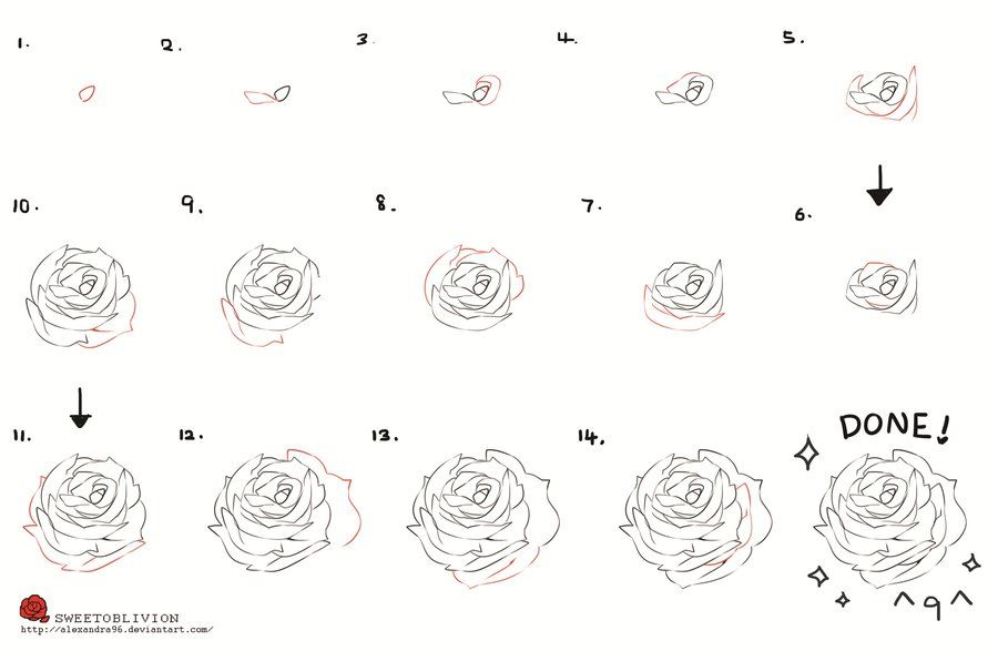 How To Draw A Rose Distractions Hobbies Drawings Rose Step By