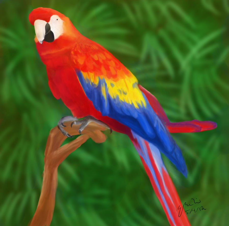 Rainbow Parrot by Parrot