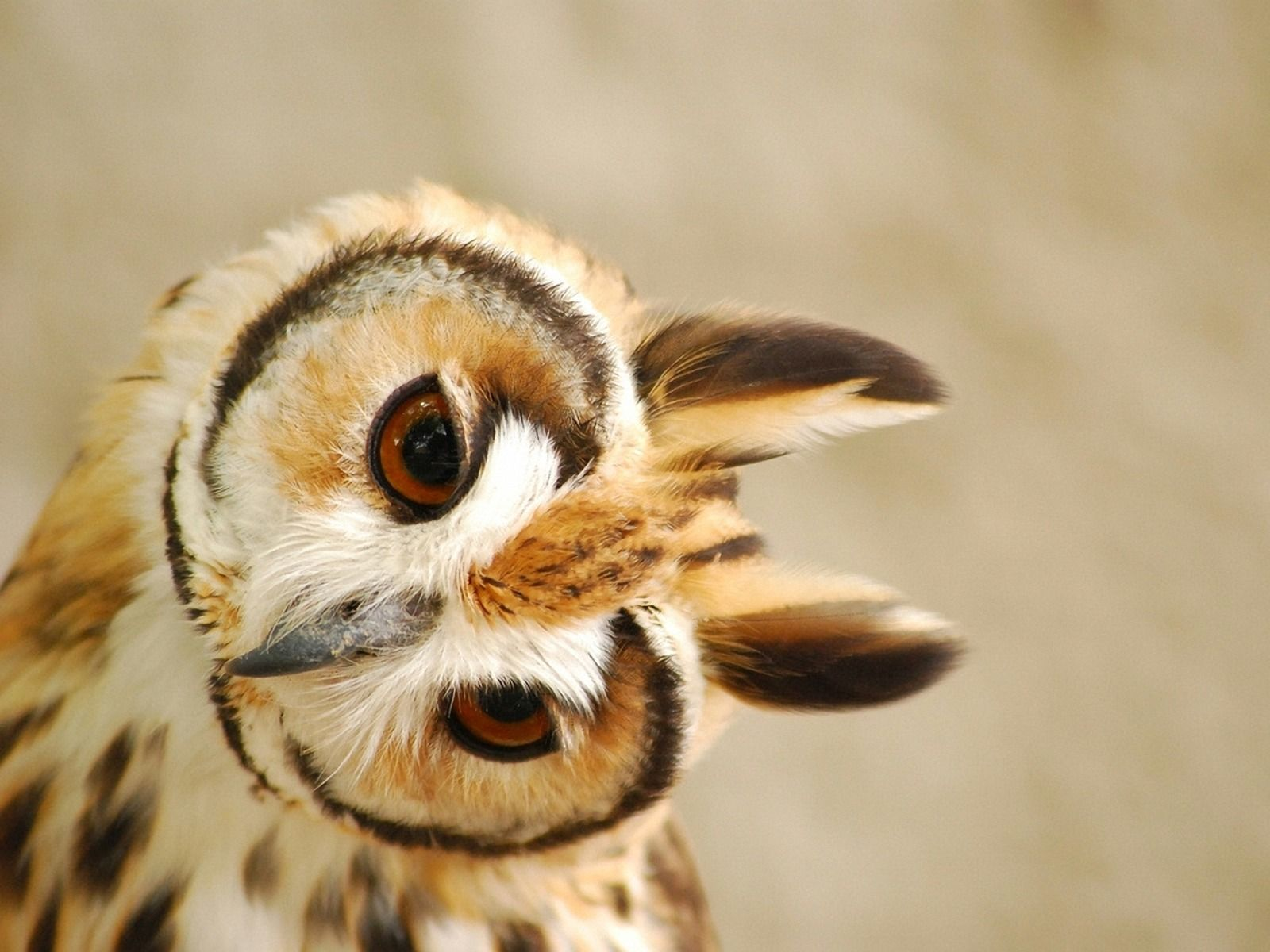 Ordinaire Cute Owl Pictures Wallpaper Desktop Background 1600x1200PX ~ Wallpaper Cute  Owl #60430 · Morning CoffeeFunny ...