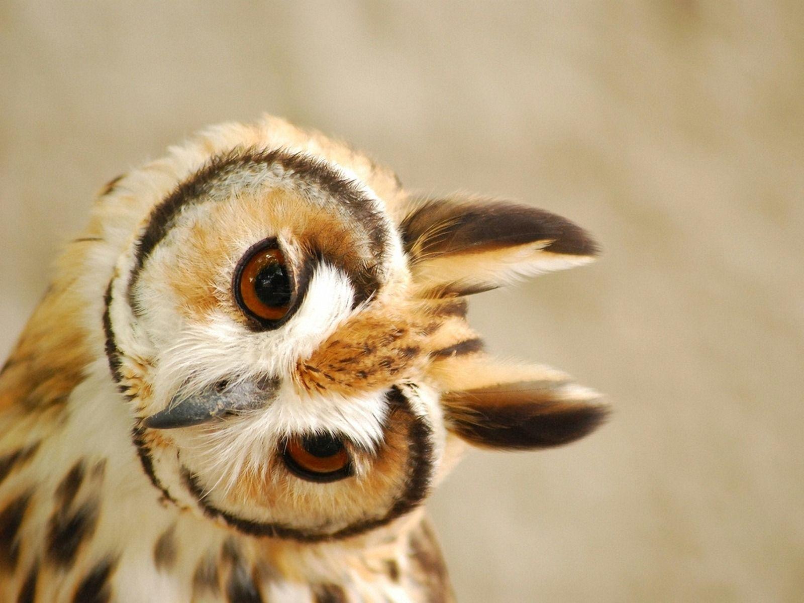 cute owl pictures wallpaper desktop background 1600x1200px wallpaper cute owl 60430
