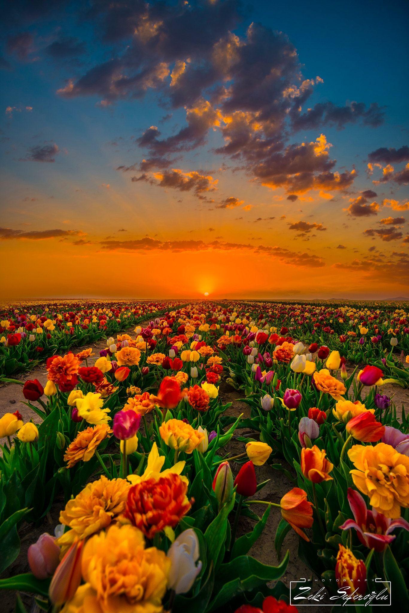 Rainbow Konya Ismil Lale Bahceleri Spring Scenery Landscape Photography Beautiful Nature