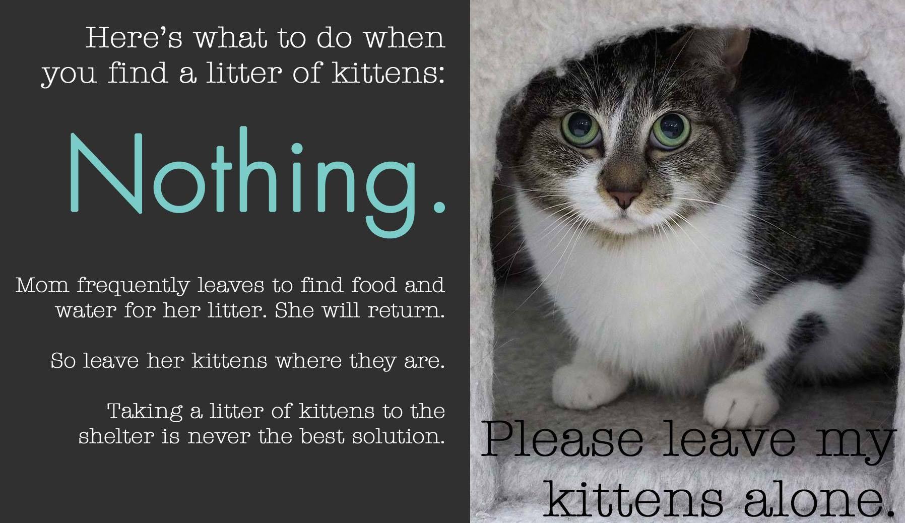 low cost spay/neuter clinics Dog clinic, Kitten season