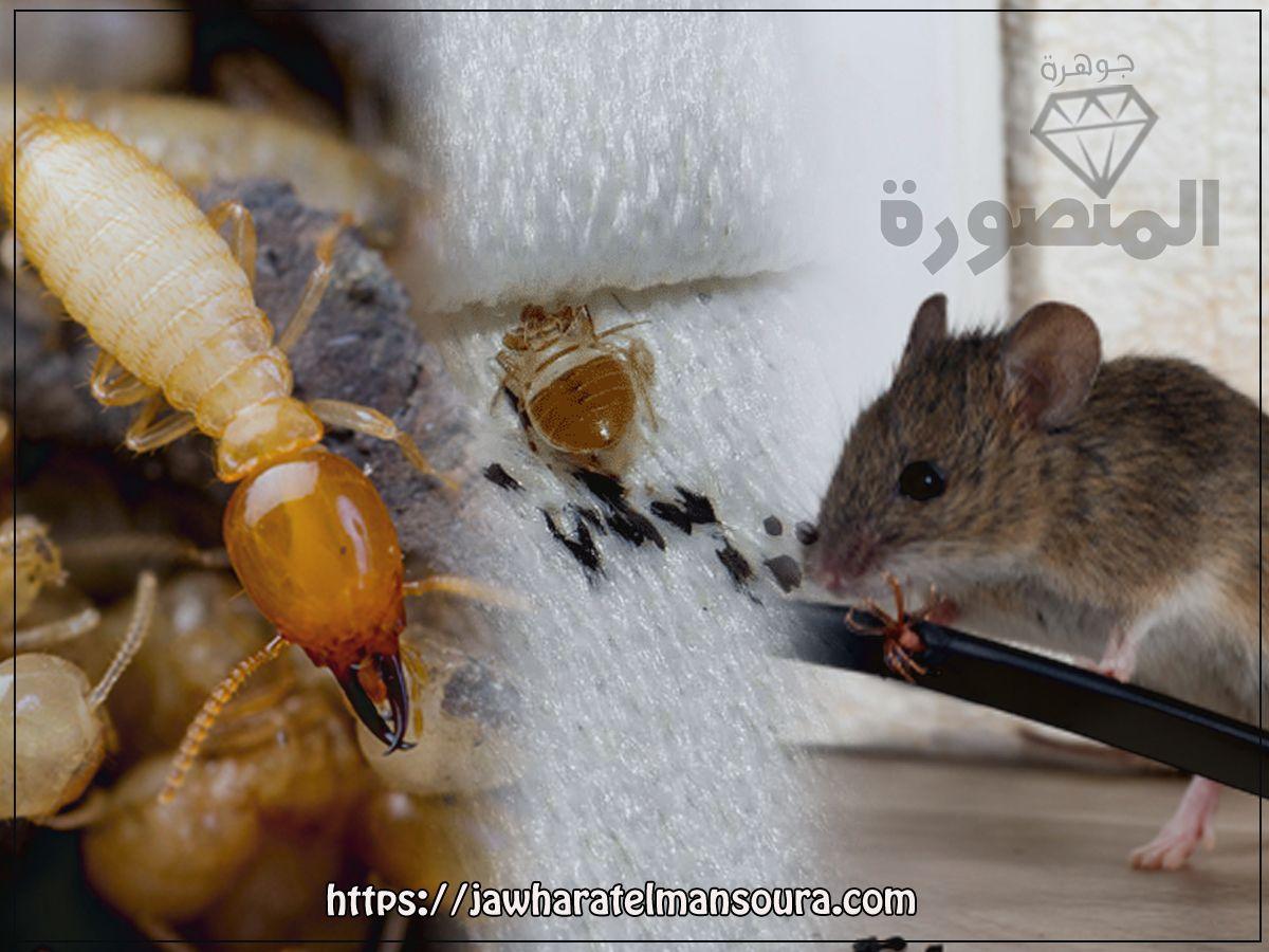 أفضل شركة مكافحة الرمة بالعين ٠٥٦٦٣٠٠٣٩٩ إبادة فورية Pest Control