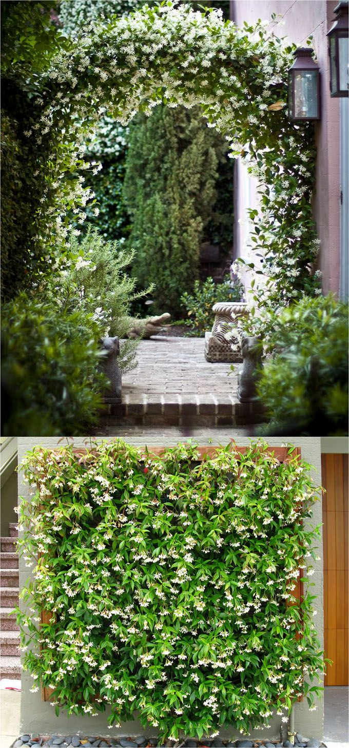 20 Favorite Flowering Vines and Climbing Plants Arbors Pergolas