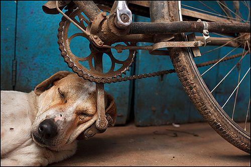 puppy dog nap on a bike