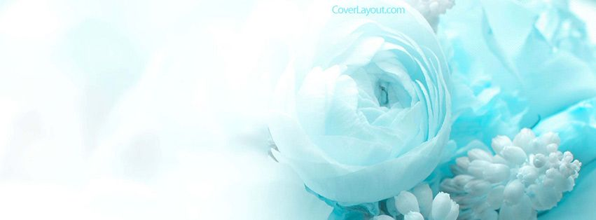 Blue And White Roses Facebook Cover Facebook Cover Blue And White Roses White Roses