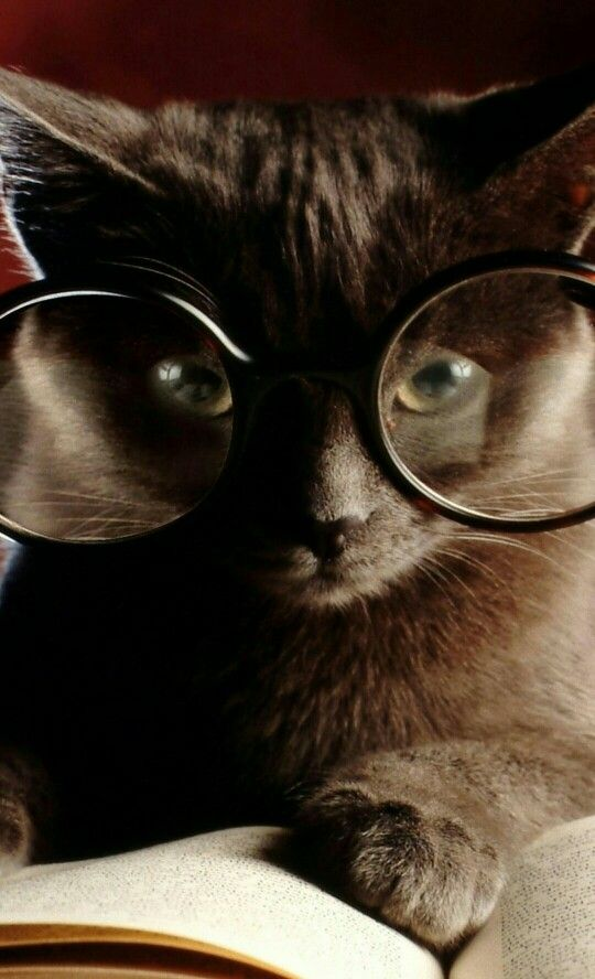 cat glasses book kitty wallpaper and desktop background 80765