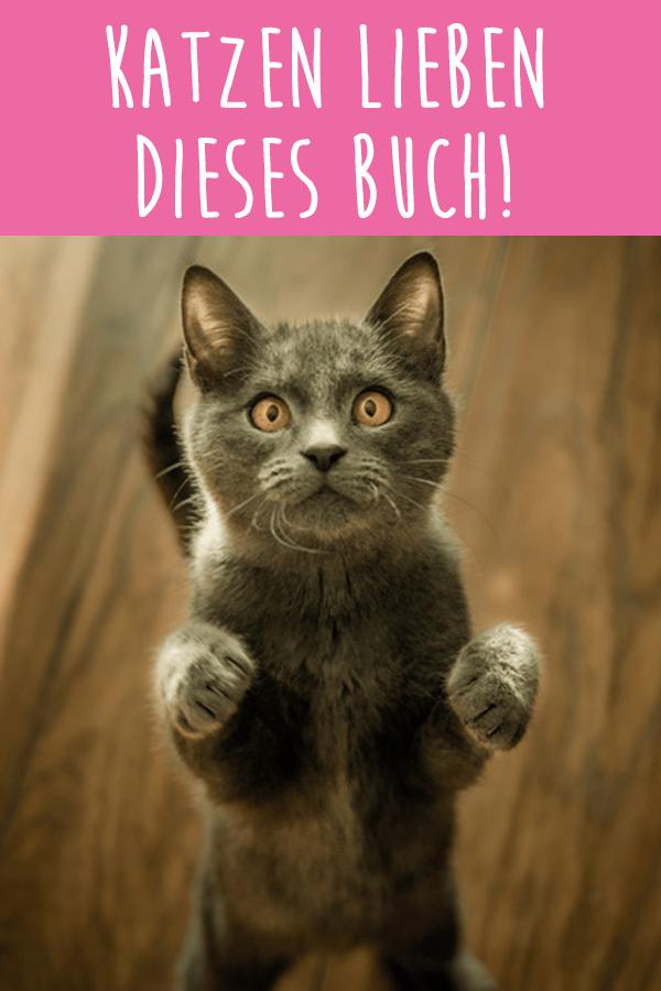 Buch Verrückte Katzen