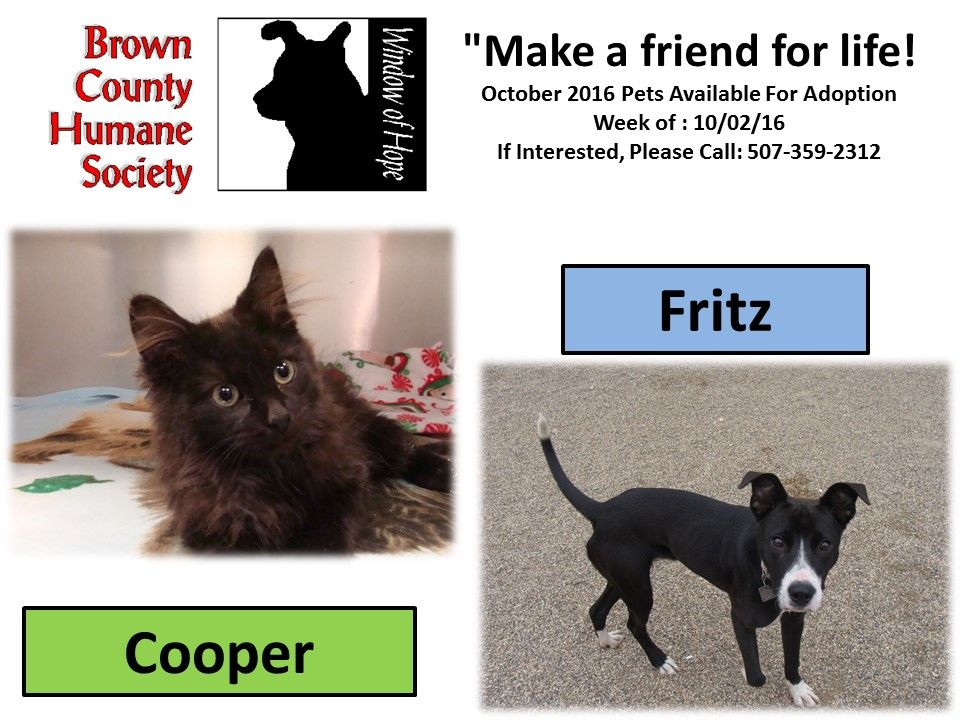 """Brown County Humane Society's """"Pets of the Week"""" October"""