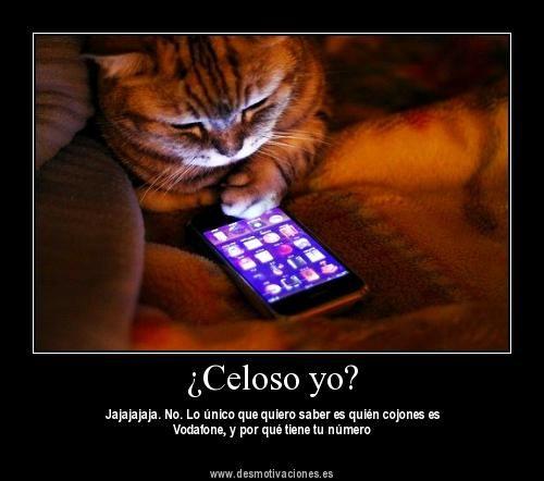 Frases Novio Celoso Imagui Cat Jump Fail Funny Cat