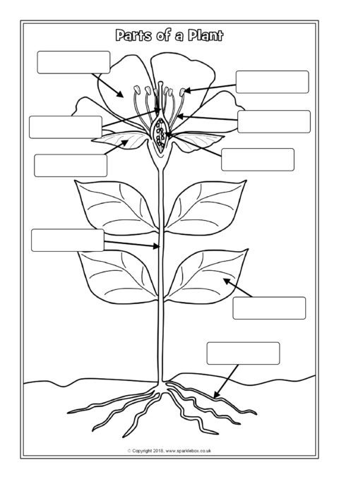 Parts Of A Plant Labelling Worksheets Sb12380 Parts Of A Flower Parts Of A Plant Plants Worksheets