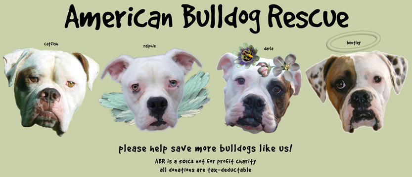 All You Bulldog Lovers Should Check Out This Site Or Find Them On Facebook Awesome Organization Helping Out As Many Bully Babies As They Can See