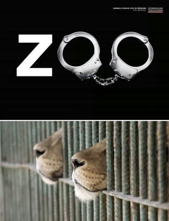 """""""The cruel beast is not behind the bars, he is in front of them"""""""
