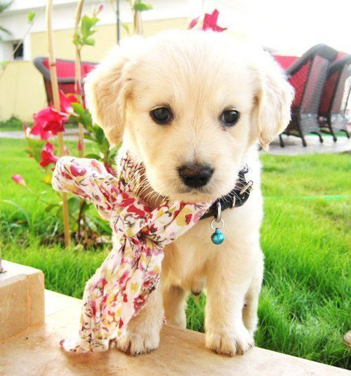 if i had a puppy this cute one day....i would let him sleep at the foot of my bed every night. :)