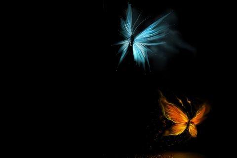 Mariposas nocturnas.
