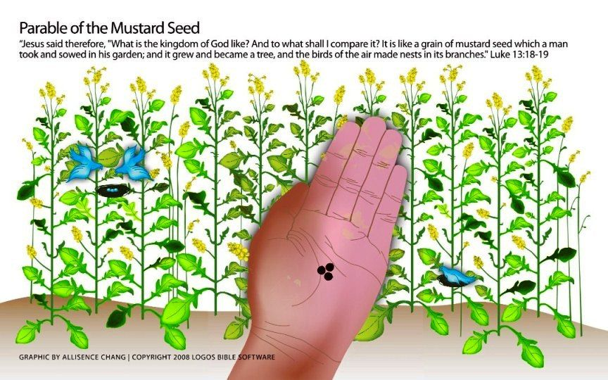 Parable Of The Mustard Seed Matt 1331 32