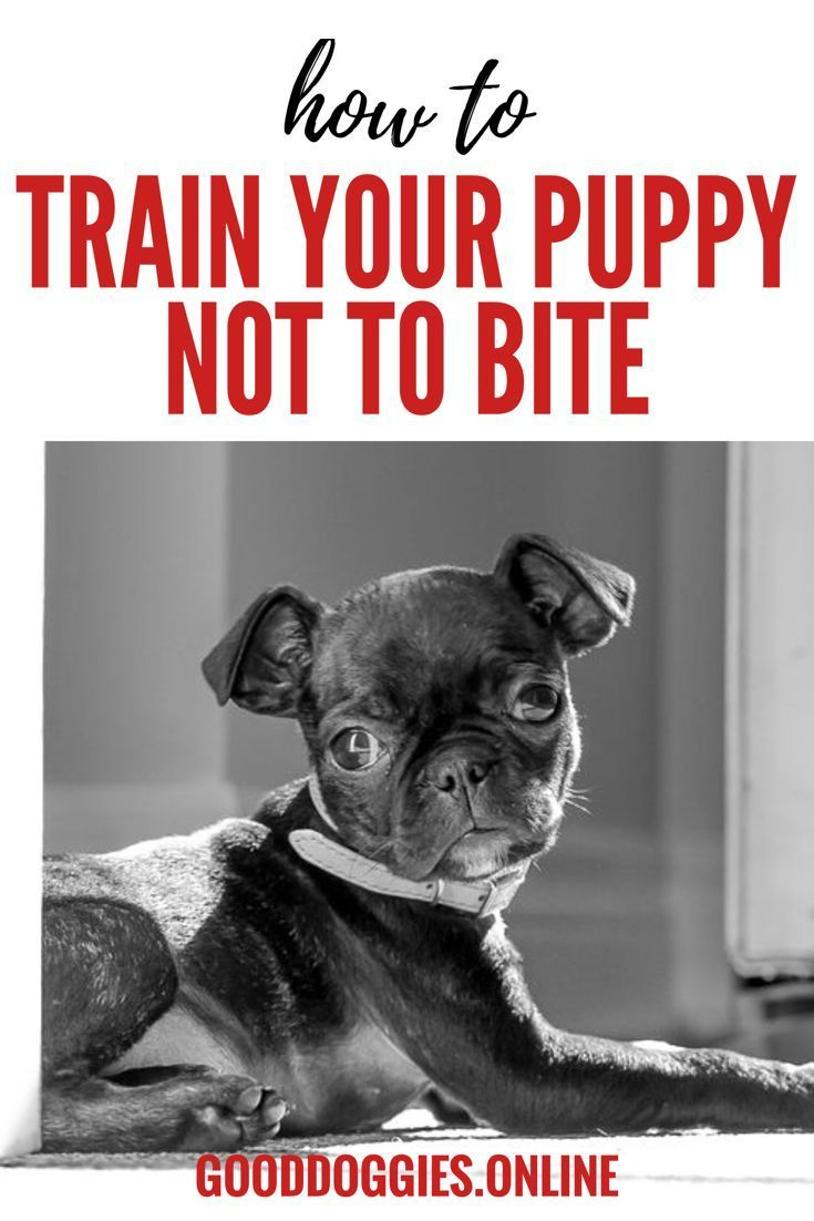 Puppy Biting Training You Are Doing It Wrong Good Dog Info