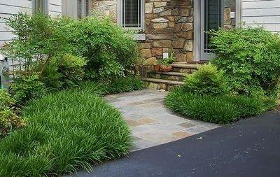 Future Plants by Randy Stewart: Liriope & Mondo Grass (ARTICLE ...