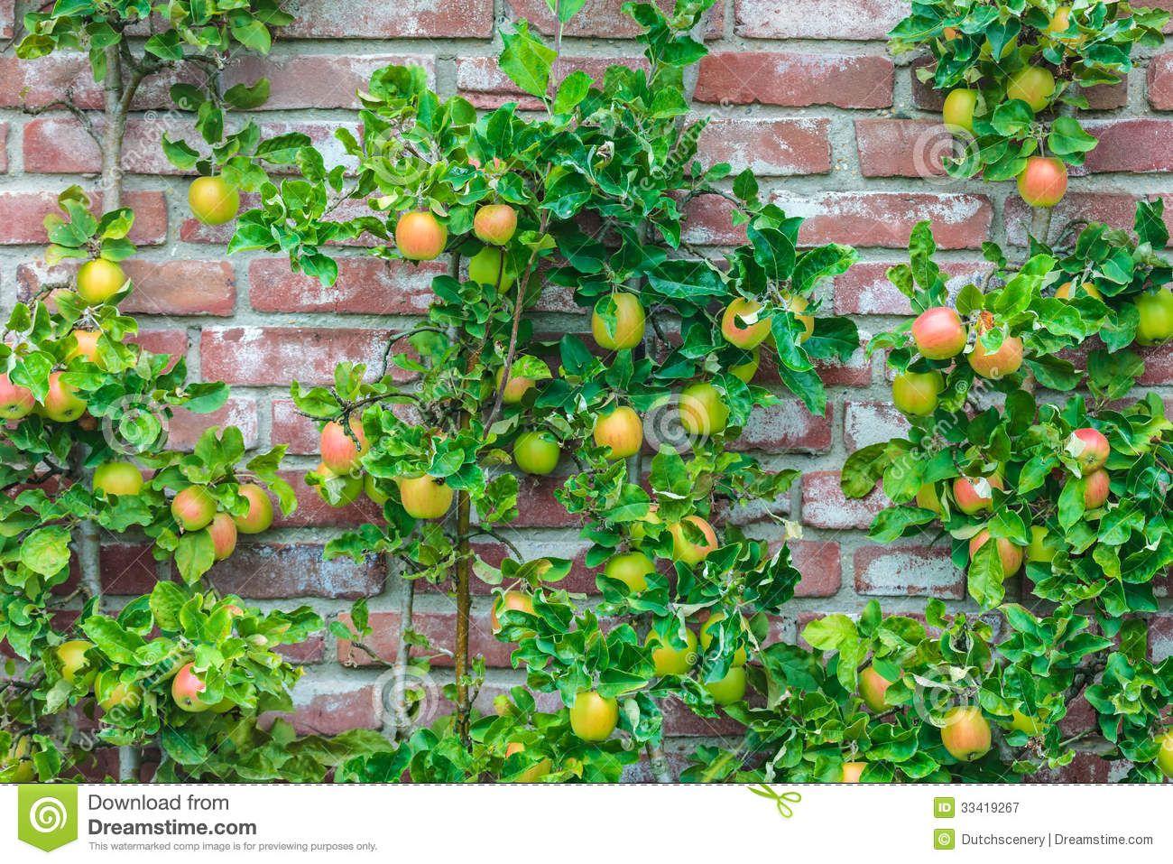 Edible plants fruit trees growing fruit trees
