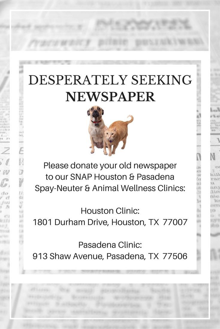 SNAP loves donations of all kinds. Newspaper, paper towels