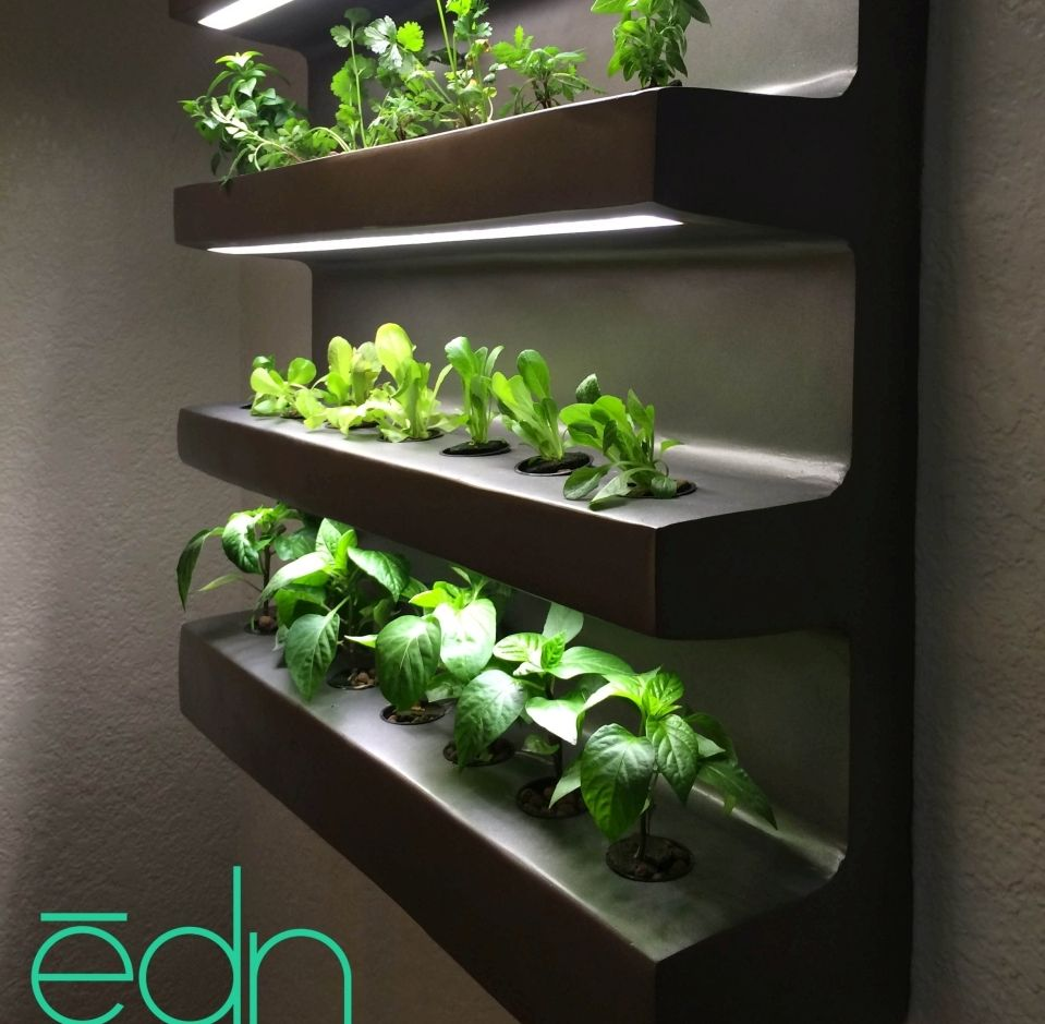 Edn by ryan woltz is an indoor wall garden that can grow for Indoor vegetable gardening tips