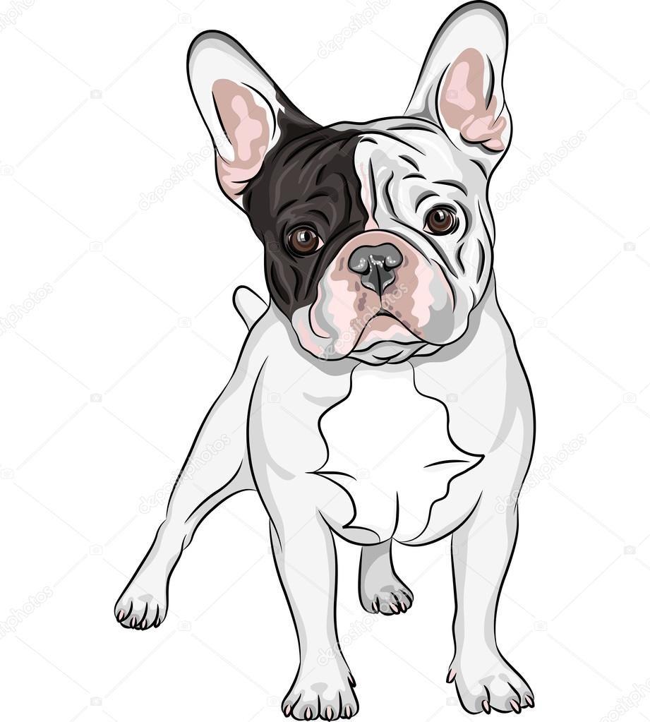 Resultado de imagem para bulldog ilustração | buldog | Pinterest ...