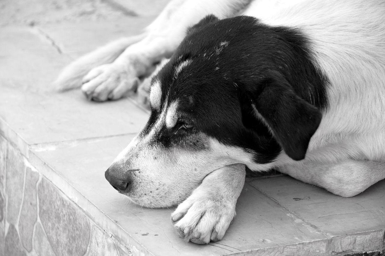 Free Image on Pixabay Dog, Animal, Pet, Animal World