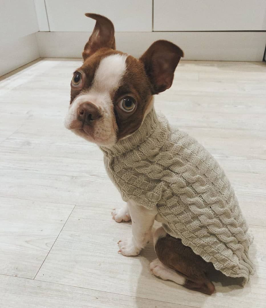 Miniature Puppies For Sale In South Dakota Ideas
