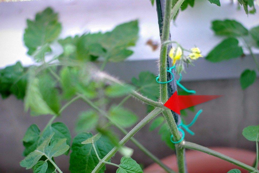 本 ミニ 仕立て 2 トマト