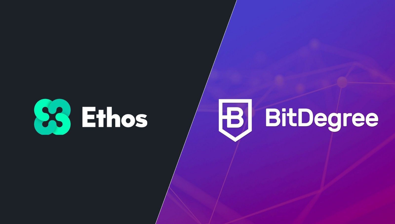 Good Bitdegree Partnership News Bitdegree Has Signed A