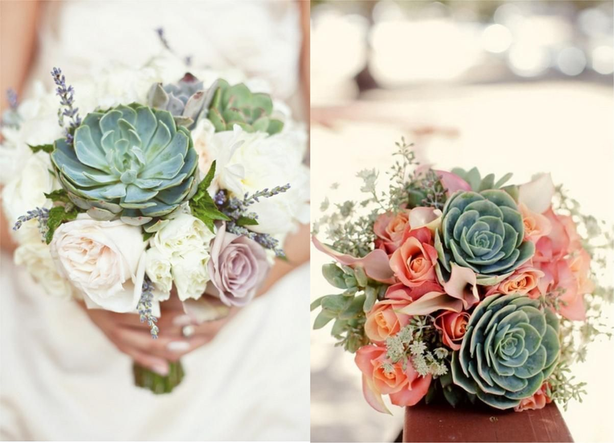Diy Wedding Flowers Succulents : Succulents flowers related keywords suggestions