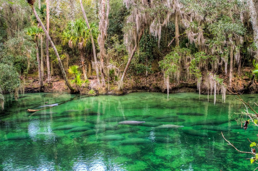 5 Great Places To See Wild Manatees In Florida Florida