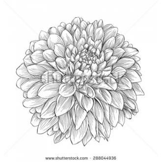 Dahlia Flower Tattoo Black And White Google Search Dahlia Flower Tattoos Flower Wrist Tattoos Dahlia Tattoo